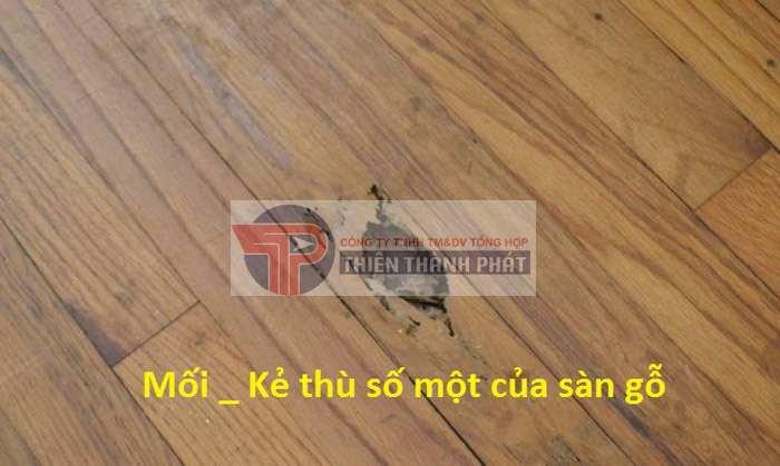 Xuất hiện hiện tượng mối mọt trên sàn gỗ